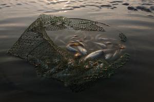 Prezentacja Olgi Mironenko na temat antropogenicznych zanieczyszczeń wód i niezrównoważonych praktyk połowowych